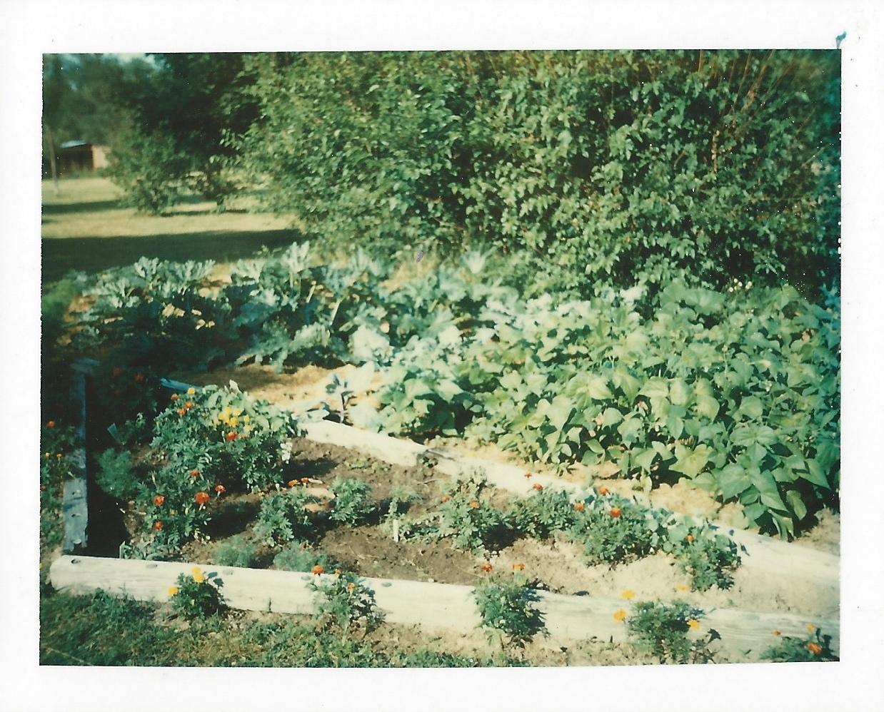 Our first indiana garden for Garden design 1970s